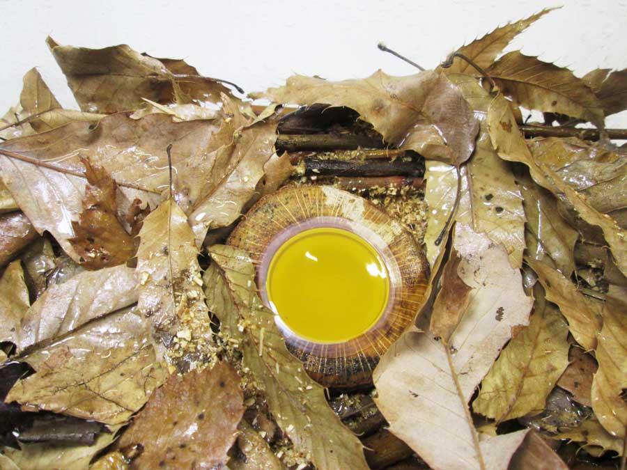 ダイソー カブトムシ用品 木の昆虫ゼリー皿2