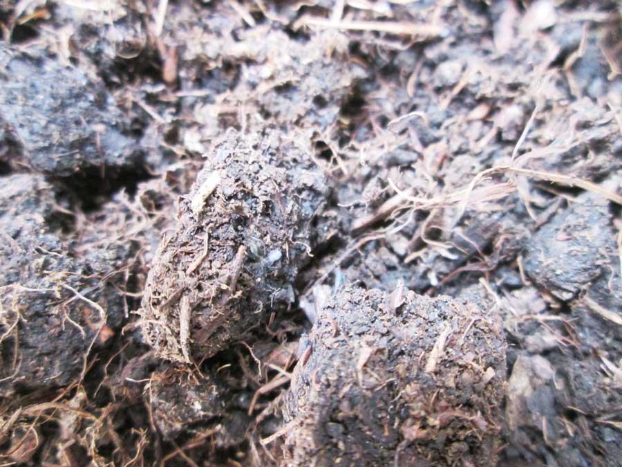 昆虫飼育用 粘着 コバエトラップ 虫かご1