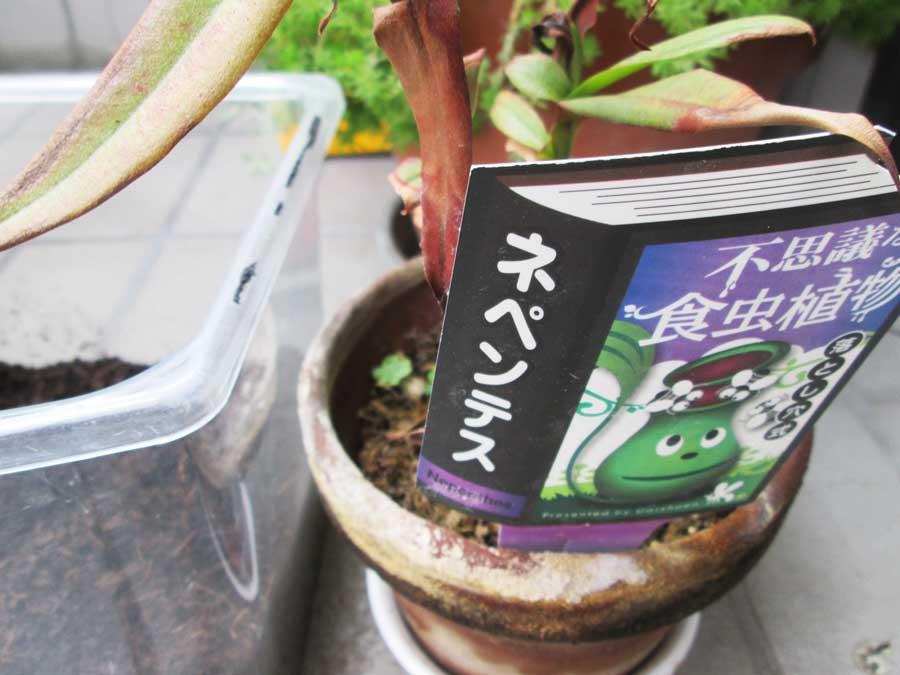 昆虫飼育用 粘着 コバエトラップ ウツボカズラ1