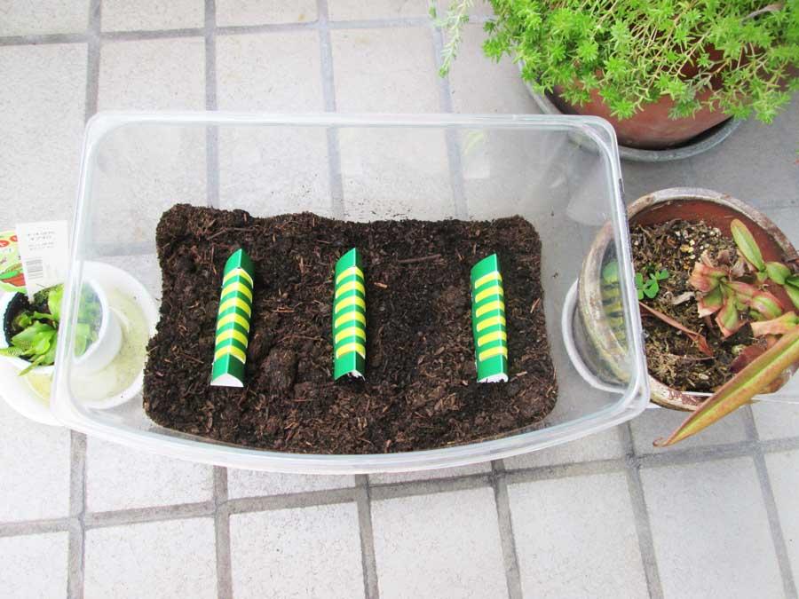 昆虫飼育用 粘着 コバエトラップ 虫かご2