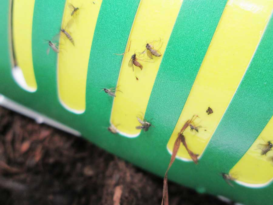 昆虫飼育用 粘着 コバエトラップ 虫かご4