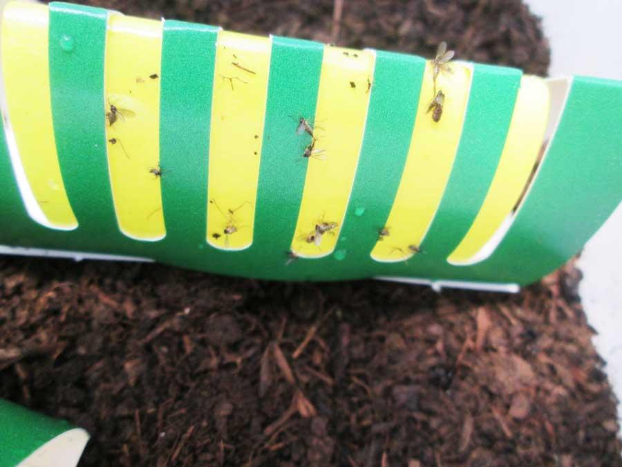 昆虫飼育用 粘着 コバエトラップ 虫かご5